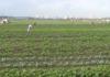 Thời tiết nông vụ ( 18/10/2021 )