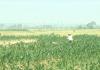 Thời tiết nông vụ ( 27/9/2021 )