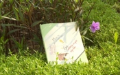 MN1CS: 15 bức thư gửi tuổi thanh xuân - Gửi những cô gái sắp lớn