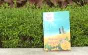 MN1CS: Hoa cúc vàng mang màu nắng