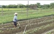 Nhịp cầu nhà nông ( 04/10/2020 )