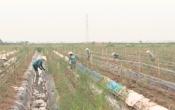 Phóng sự: Vai trò của doanh nghiệp trong xây dựng NTM tại huyện Xuân Trường