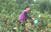 Phụ nữ Việt (23/01/2019)