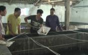 Vùng biển quê tôi: Bạch Long khuyến khích các doang nghiệp mở rộng phát triển sản xuất giống