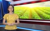 Thời tiết nông vụ ( 01/06/2020 )
