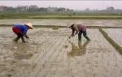 Thời tiết nông vụ ( 01/3/2021 )