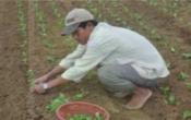 Thời tiết nông vụ ( 02/11/2020 )