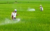 Thời tiết nông vụ ( 05/4/2021 )