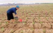 Thời tiết nông vụ ( 10/08/2020 )
