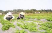 Thời tiết nông vụ (12/02/2019)