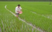 Thời tiết nông vụ ( 15/3/2021 )