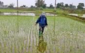 Thời tiết nông vụ ( 22/3/2021 )