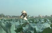 Thời tiết nông vụ ( 25/10/2021 )