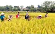 Thời tiết nông vụ ( 27/05/2019 )