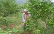 Thời tiết nông vụ ( 30/09/2019 )