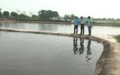 Vùng biển quê tôi: CTy TNHH MTV nông nghiệp Bạch Long phát triển nuôi trồng thủy sản ( 24/08/2017 )