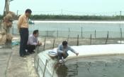 Vùng biển quê tôi: Quy hoạch mở rộng vùng nuôi tôm thâm canh công nghiệp