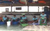 Vùng biển quê tôi: Thị trấn Thịnh Long tập trung phát triển chế biến Thủy - Hải sản ( 20/09/2017 )