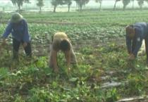 Thời tiết nông vụ ( 13/04/2020 )