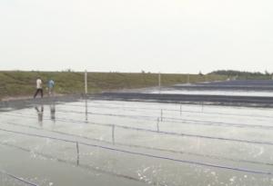 7 tháng năm 2019, sản lượng thủy sản của huyện Hải Hậu đạt 2.637 tấn, tăng 3,5% so với cùng kỳ năm 2018.